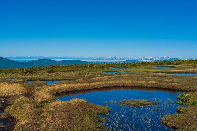 苗場山頂直下の池塘越しに北アルプス
