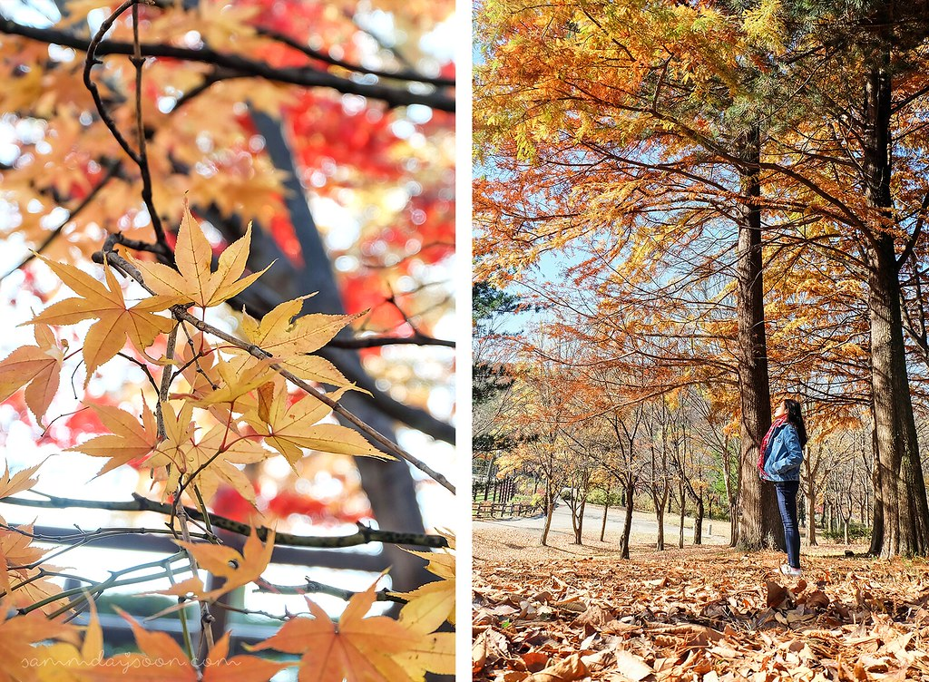 seoul_grand_park_autumn_light
