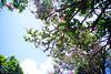 藍天、綠葉、紅花 | 台南321巷藝術聚落
