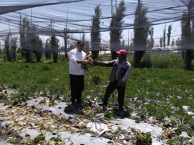 cedrón-alejandro-flores-xochimilco (6)