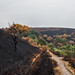 Saddleworth Moor Fire - The Aftermath (3 weeks later)