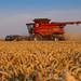 "Wheat Harvest 2018 | CASE IH 9240 K7 ""CTF special"" combine harvester"