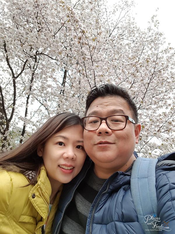 sapporo odori park sakura