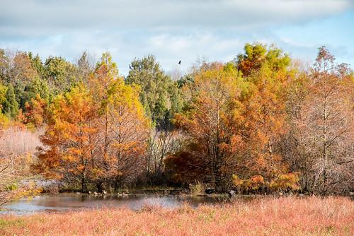 Howarth Memorial Wetlands Walk