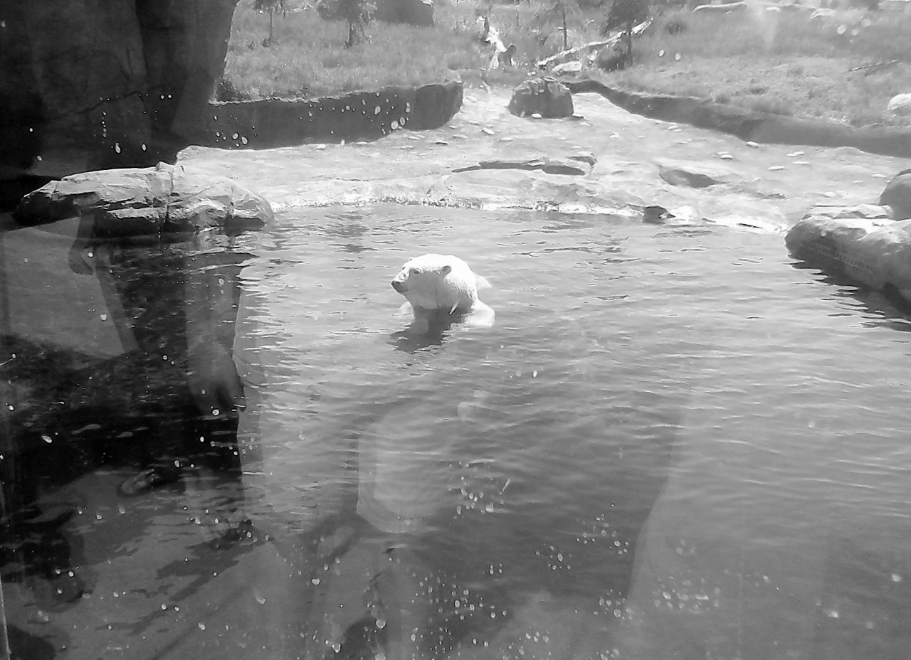 Columbus Zoo BW 5-31-2014 10-58-00 AM