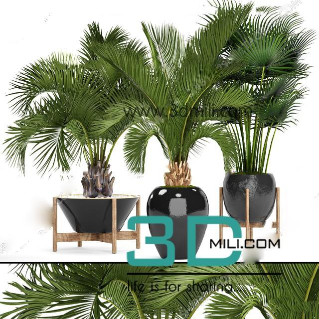 324  Plant 3dsmax Model Free Download - 3D Mili - Download 3D Model