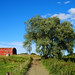 red tin barn and summer tree