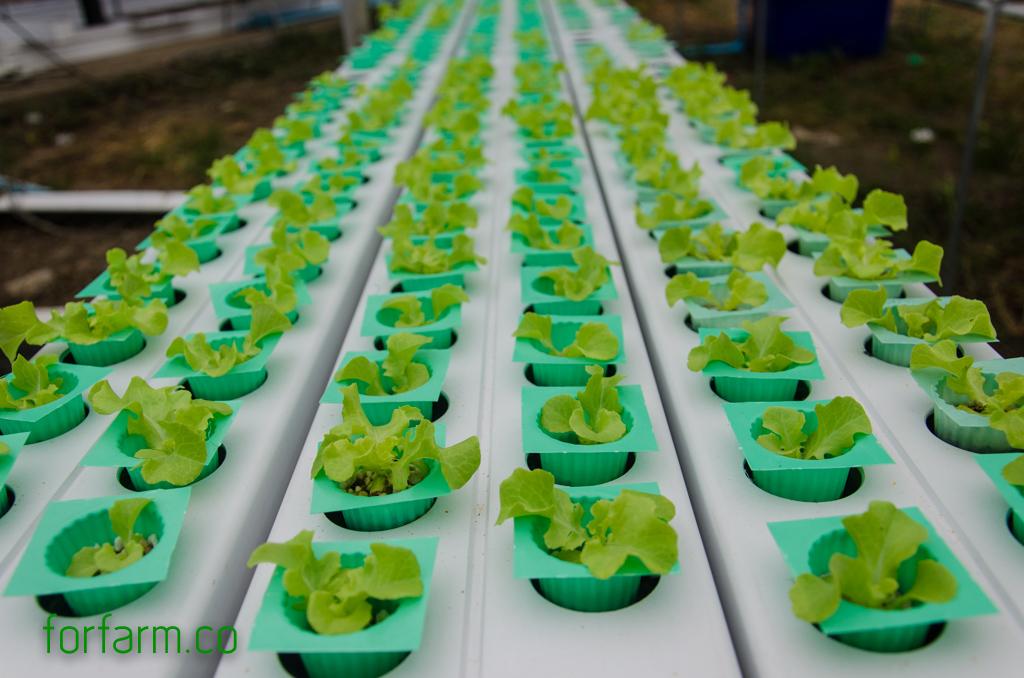 ปลูกผักไฮโดรโปนิกส์ ด้วยเพอร์ไลท์และเวอร์มิคูไลท์