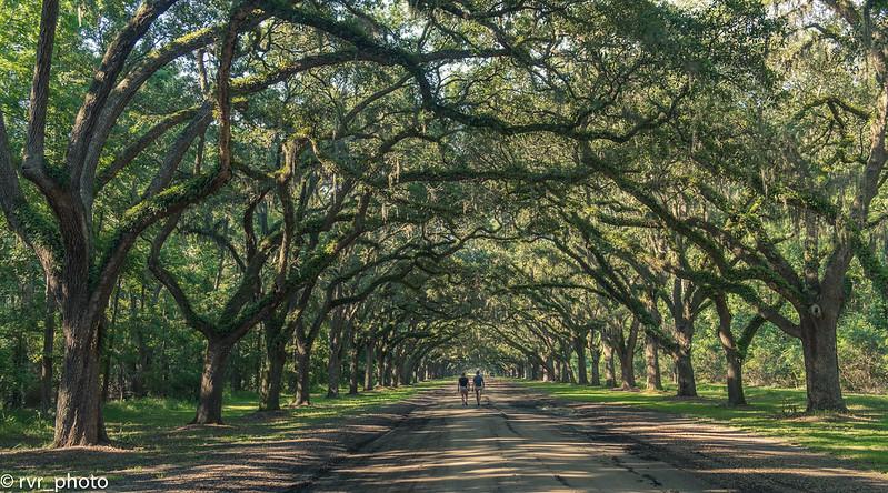 Wormsloe Oaks Plantation - Savannah