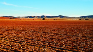 South Australian Farmland in the Northern Ranges near Burra