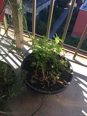 High Garden 2018