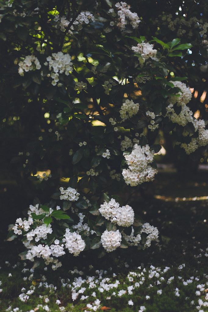 Kisiel-2018-06-23-043
