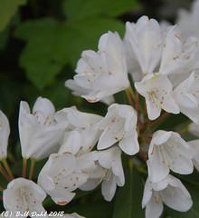 Summer Blooms - 60