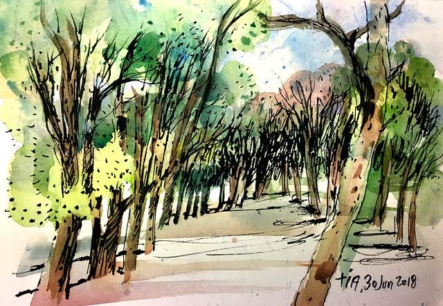 180630_trees