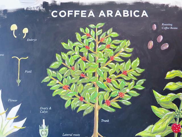 錘子咖啡 (12)