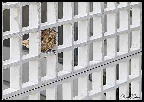 metrolink bird fence stlouis missouri nikon d850