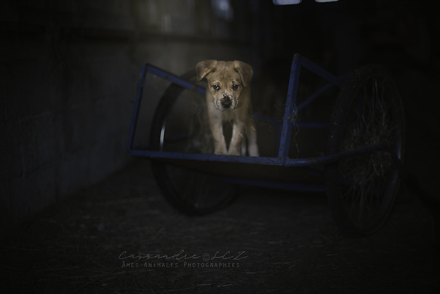 Âmes Animales Photographies - Page 3 41381199510_4707799799_z