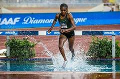 Světový rekord na stýpl žen a Holušův národní rekord