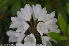 Summer Blooms - 61