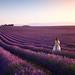 le plateau de valensole by Andrea Burla Landscape and Travel Photography