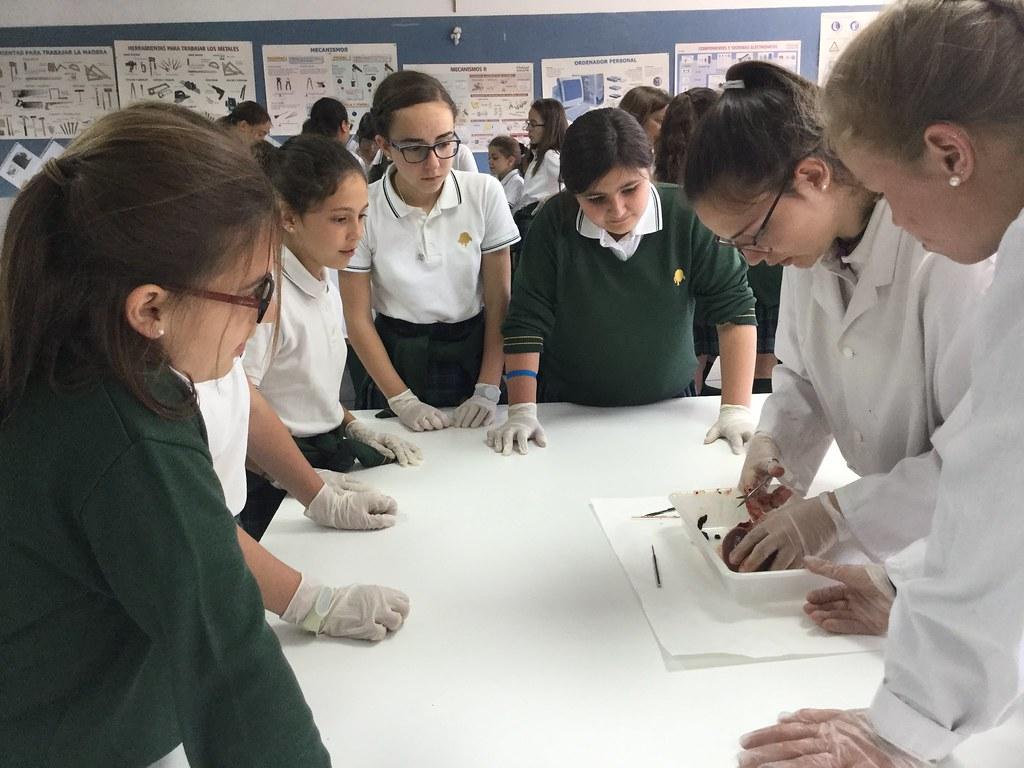Alumnas de Secundaria muestran a las de 6º la disección de un corazón