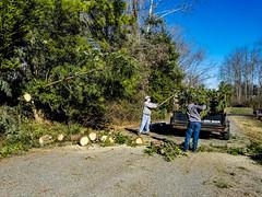 Loblolly Pine & Carolina Hemlock down.
