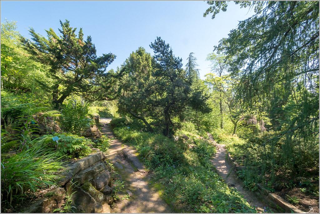 Jardin botanique Saverne: le jardin 43091002821_625c670539_b