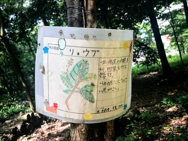 大茂山 木の解説