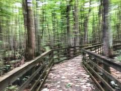 wetland blur