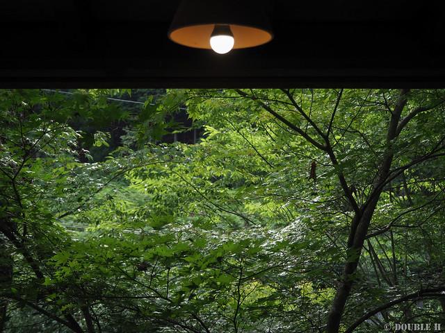 Terrace Cafe Tree House 2018-07-13 (8)