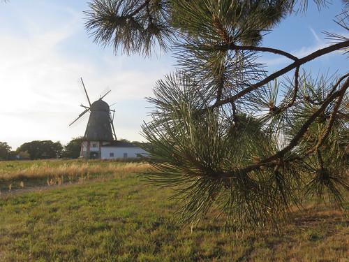 Blick zur Mühle