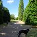 Dog at Grosvenor Park, 2018 Jul 08 -- photo 1
