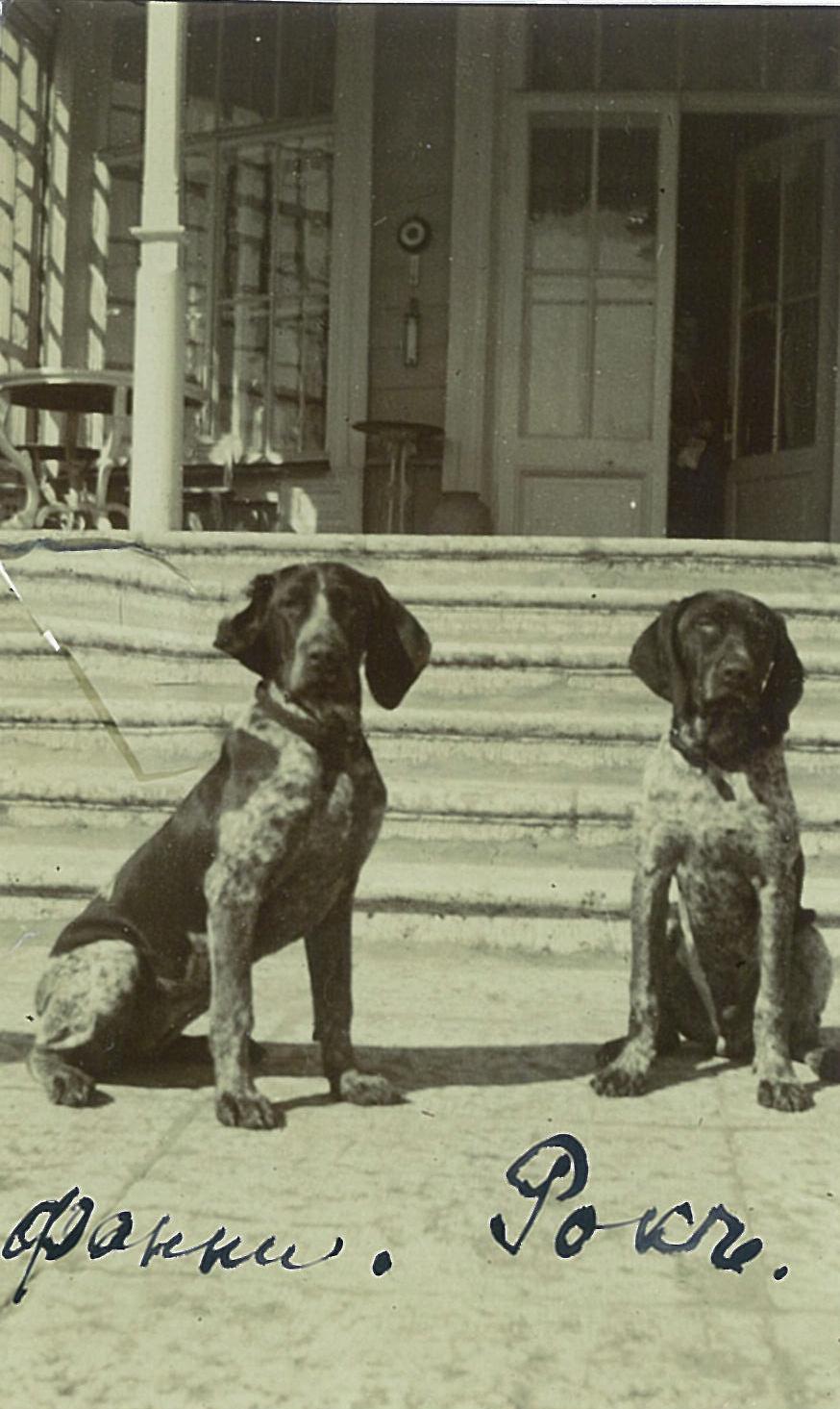 Охотничьи собаки Всеволожских Фанни и Рок перед усадебным домом в Рябово