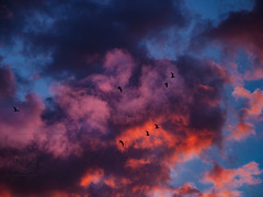 Birds At A Fiery Sunset