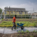 Urban Farming: New York City