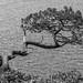 Don't climb the tree! by ColytonJohn