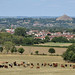 Glastonbury Tor, the town of Street, and some cows
