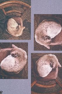 Bežo 11 | Cats Edition 10