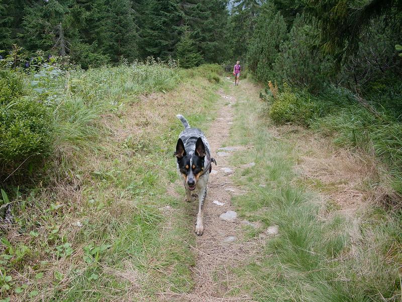 psem tatry dolina Koprowa