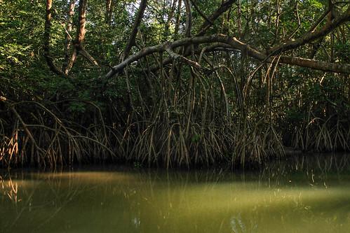 Río Arriba (52)