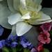 59072.05 Narcissus, Forsythia, Uvularia grandiflora, Hyacinthus orientalis, Mertensia virginica, Pulmonaria officinalis, Pulmonaria saccharata, Scilla siberica, Erythronium americanum, Trillium grandiflorum