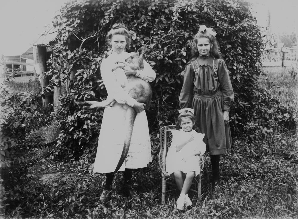 Three girls and a kangaroo, circa 1900-1910. The girls pose in a garden in front of a shed covered in creepers. The girl on the right stands and holds the kangaroo aloft. The youngest girl sits in a small, wicker chair. Item is held by John Oxley Library, State Library of Queensland.