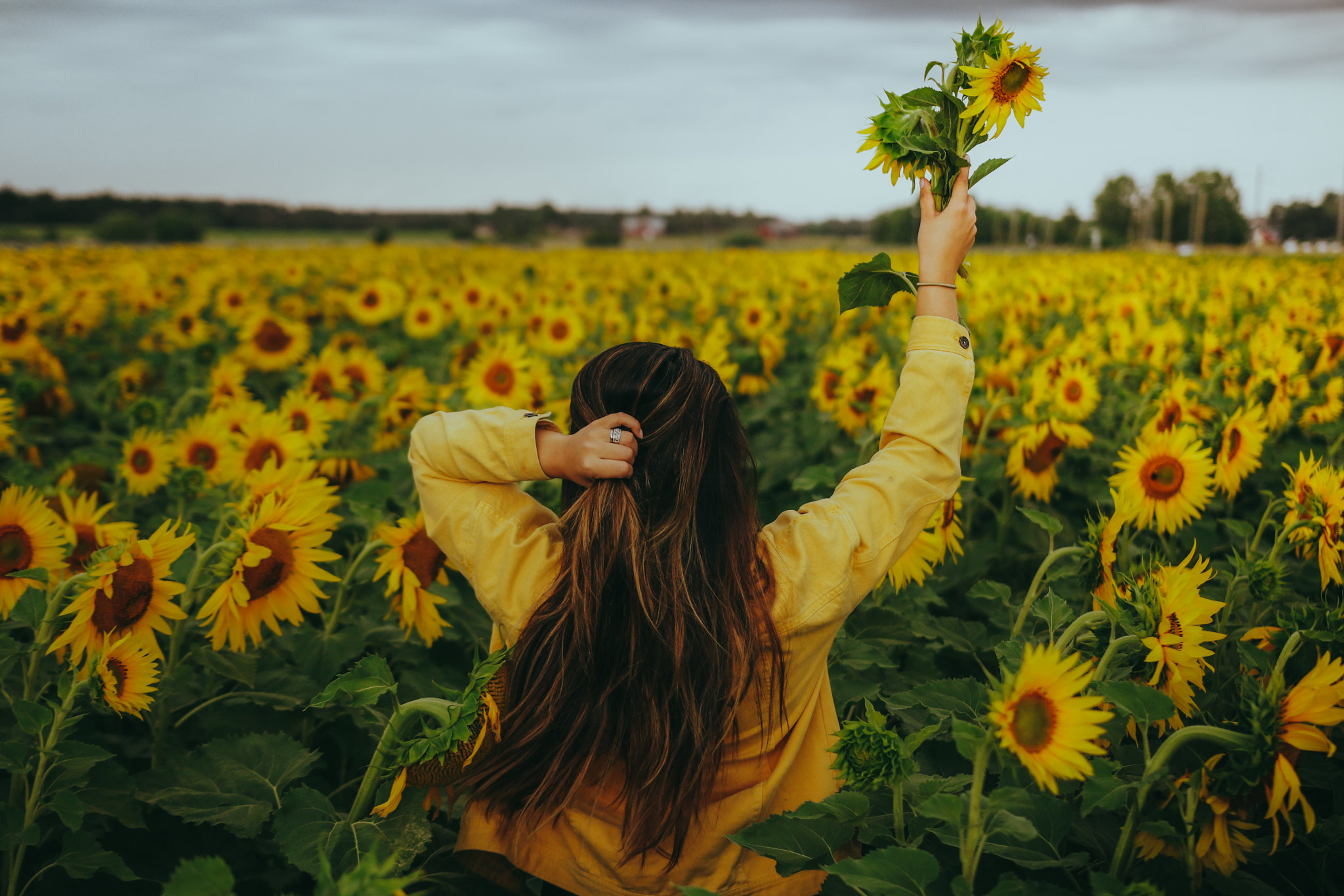 auringonkukkia-32