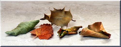 219 - 365 Five Leaves