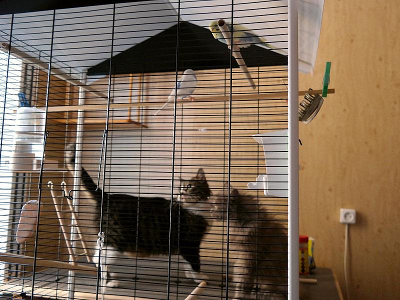 Коты и попугайчики