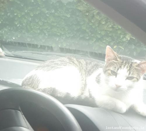 Tue, Aug 7th, 2018 Lost Male Cat - Porterstown Lane, Meath