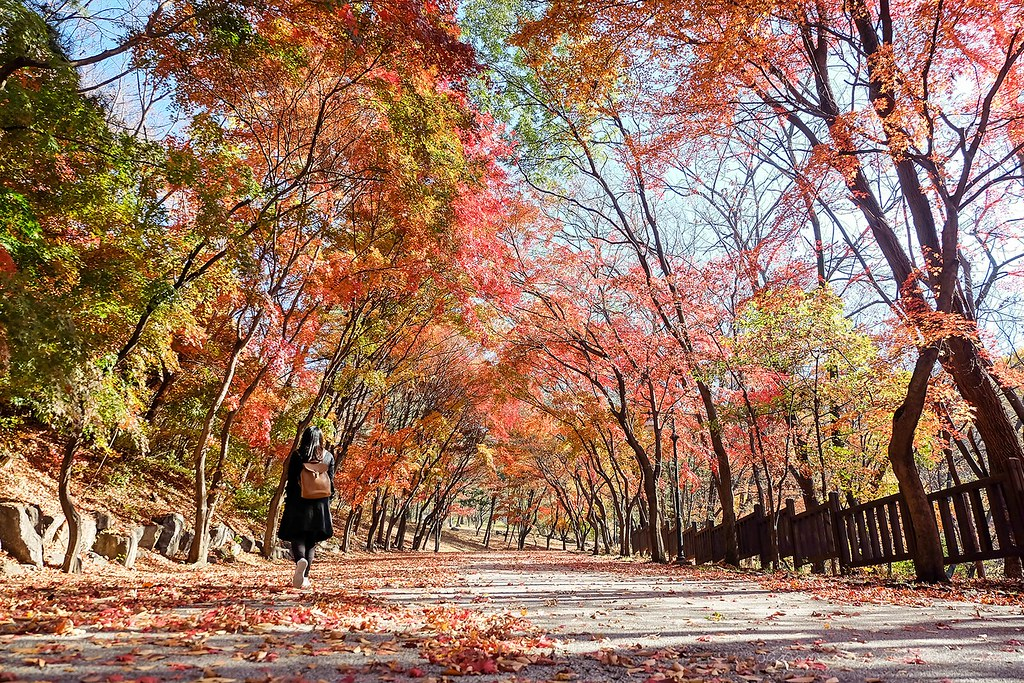 surreal_seoul_grand_park