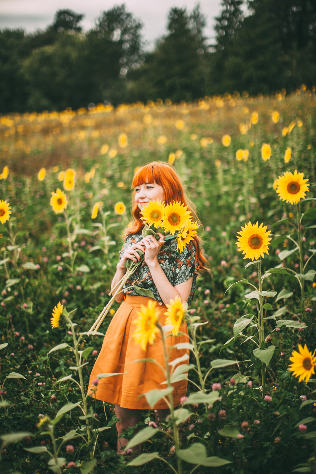 sunflower field-5