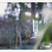 hummingprism by chickentender™ (Eyewanders Foto)