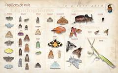 Papillons de nuits - 2 Juin 2018